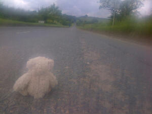 Bear's not so sure about this route uphill.